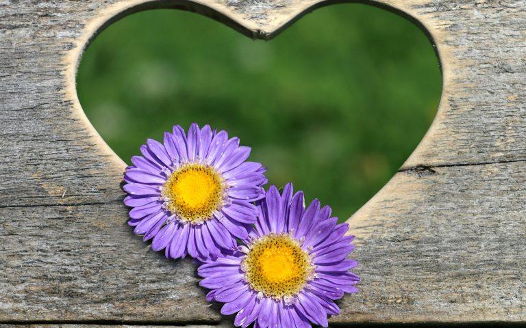 asesoramiento, belleza natural, cosmetica natural, asesoramiento personal, belleza y cosmetica natural